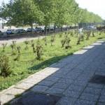 Tre fermati per furto nel Parco de Filippo
