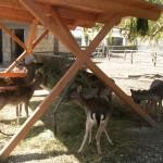 Zoo di Napoli: altri 7mila mq riqualificati